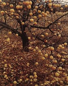 Fruit Photography Lombok News Mexico Golden Le Autumnal Equinox Mabon