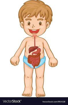 Senses Preschool, Preschool Science, Preschool Worksheets, Montessori Activities, Activities For Kids, Llama Arts, Human Body Anatomy, Body Picture, Programming For Kids