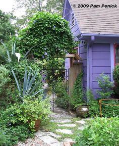 El Jardin Encantador: Lucinda Hutson's garden. Blue Sky Vine growing wildly.