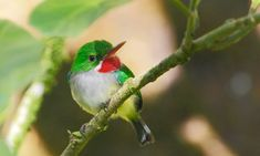 A Puerto Rican tody, photography by W. Insect collapse: 'We are destroying our life support systems' Rainforest Insects, Life Support System, Porto Rico, Tropical Forest, Fight The Good Fight, Puerto Ricans, Bird Species, Bird Watching, Natural World