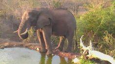 | Africam Elephant at Naledi - Nov 18 2015 - 5:39pm