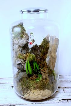 huge terrarium with a door as a prop - love!