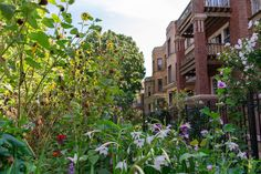 Chicago landscaping: Ideas for front yards, gardens, spring plants - Curbed Chicago Spring Plants, Outdoor Gardens, Patio Plants, Thriving Garden, Drought Tolerant Landscape, Plants, Urban Garden, Cool Plants, Front Yard