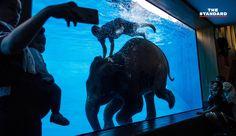 ช้างไทยครองแชมป์ถูกทรมานเพื่อการท่องเที่ยวมากที่สุดในเอเชีย