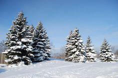 """Bluebird Day"" by Kristina Austin Scarcelli.  Freshly fallen snow at Fellows Creek, Canton, Michigan."