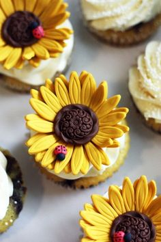 """Sunflower Cupcakes - make with buttercream using the """"v"""" tip and an oreo or chocolate candy in the middle"""