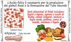 L'acido folico in gravidanza