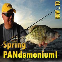Spring PANdemonium, How- To