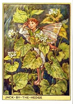 Jack-by-the-Hedge Flower Fairy Vintage Print, Cicely Mary Barker « The Flower Fairy Shop
