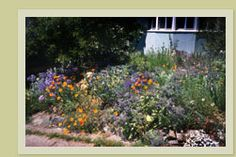 Guide To Bee-Friendly Gardens - Home  This is what a garden for bees looks like. It's also good for butterflies