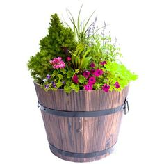 Gardenised Whiskey Wooden Barrel Planter Full Sun Container Plants, Container Gardening, Outdoor Plants, Outdoor Gardens, Outdoor Spaces, Wooden Planters, Planter Pots, Whiskey Barrel Planter, Whiskey Barrels
