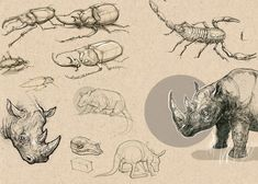 beetle anatomy   Tumblr