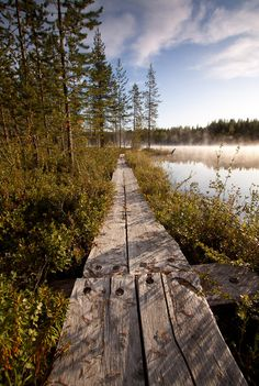 Old Rustic Timber Walkway
