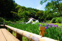 Suivez Danbo pour une magnifique balade japonaise en photos | DozoDomo