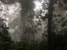Dark Green Aesthetic, Nature Aesthetic, Dark Paradise, Gloomy Day, Forest Fairy, Dark Places, Dark Forest, Pretty Pictures, Aesthetic Pictures