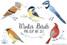 FREE! (7 Dec-13 Dec 2015 0nly.) Download now. Winter Birds Clip Art PNG by Trinket Allsorts on Creative Market
