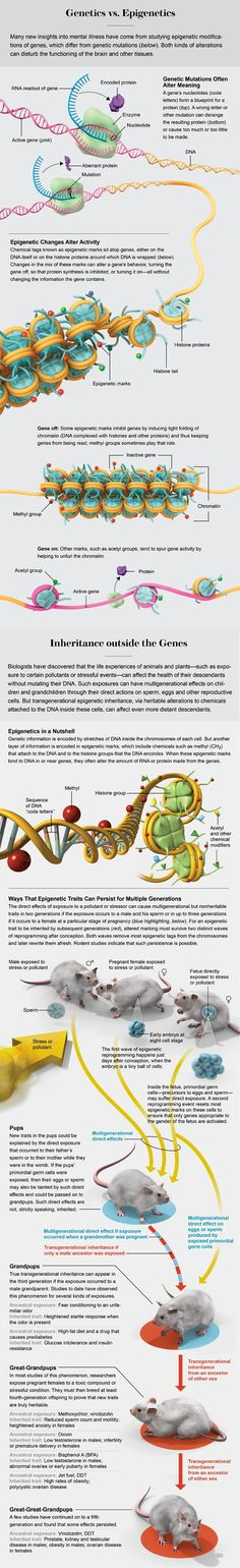 Gene Regulation, Illustrated More