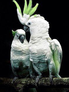 สัตว์ปีก