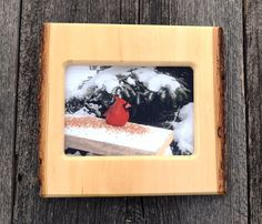wood Christmas gift, 5 x 7 photo frame,  rustic, live edge, birthday gift, wildlife photo, handmade, country primitive, basswood, cardinal.