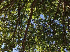 #richmondpark #tree