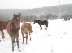 Horse group in snowing House Of Night, Horse Pictures, Photo Editing, Snow, Horses, Stock Photos, Fine Art, Group, Photography