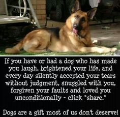 The love of our dogs.....