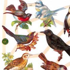 Bonte Vogels - Plaatjes
