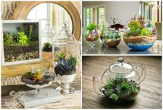 How tocreate amagical miniature garden that will add atouch ofcoziness toany home