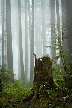 Foggy Forks Forest by PatT&5 on Flickr.