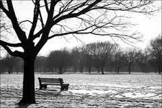 Park bench and tree reference