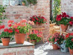 75 Besten Blumen Pflanzen Bilder Auf Pinterest Gardens