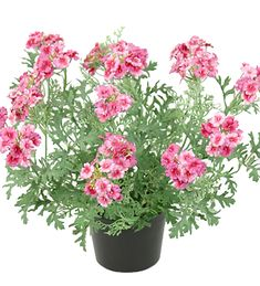 Billige Kunstige blomster i forskjellige farger. Plants, Flora, Plant