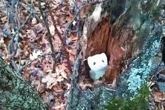 New trending GIF on Giphy. cute tree mouse ermine cute mouse. Follow Me CooliPhone6Case on Twitter Facebook Google Instagram LinkedIn Blogger Tumblr Youtube