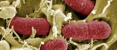 'Super bactéria', perigosa e resistente, está a alastrar-se - Um relatório feito em maio passado sugeriu que, a partir de 2050, 10 milhões de pessoas poderão morrer a cada ano vítimas de bactérias resistentes a antibióticos.
