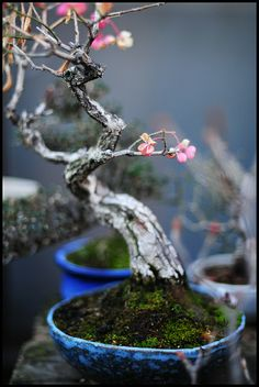 With patience and nurturing come great things. [Bonsai 盆栽]