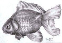 Risultati immagini per koi fish drawings in pencil Fish Pencil Drawing, Sea Drawing, Pencil Drawing Tutorials, Fish Drawings, Pencil Art Drawings, Realistic Drawings, Hair Drawings, Simple Drawings, Drawing Tips