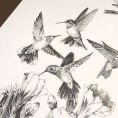 Colibri Gezeichnet Fliegener Vogel Zeichnungen