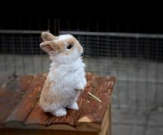Animals And Pets, Baby Animals, Funny Animals, Cute Animals, Baby Bunnies, Cute Bunny, Bunny Care, Cute Little Things, Fuzz