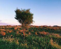 #inspiration #inspiracion #vscocam #vsco #naturaleza #nature #arboldevida #tree