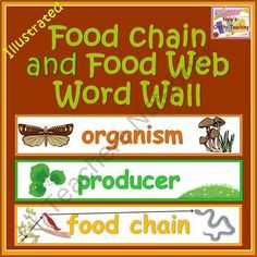 Science Word Wall of Food Web and Food Chain Terms product from NylasCraftyTeaching on TeachersNotebook.com
