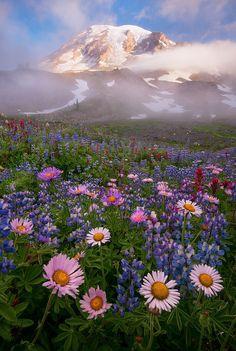 La felicità è sempre e soltanto un istante. La felicità non è una cosa che dura. Non è un tempo, è un istante o una serie di istanti. Un punto di contatto con qualche cosa di straordinario. (Francesco Alberoni)Mount Rainier (Seattle, Washington)