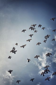 Mariann Nikolaisen // beautiful. reminds me of the pigeons that circle above our house every afternoon.