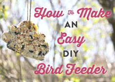 8 steps to assembling a DIY warm weather bird feeder -- fantastic project for kids!