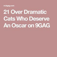 21 Over Dramatic Cats Who Deserve An Oscar on 9GAG