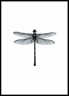 Poster with a black and white dragonfly, Swedish design. zwart wit, Dragonfly Black And White, Poster Black And White Posters, Black And White Prints, Black And White Drawing, Black White Art, Black And White Illustration, Black And White Design, Gold Poster, Poster Poster, Poster On Wall