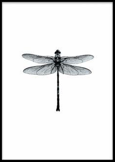 Dragonfly black and white, poster. Vackert print med svartvit trollslända. Lika snygg på väggen i ett tavelkollage som ståendes på hyllan. Kombinera gärna denna snygga poster tillsammans med några utav våra svartvita grafiska motiv, eller varför inte i kombination med någon av våra vackra prints och tavlor med fjärilar i färg.