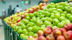 ARE YOU EATING ONE YEAR OLD APPLES? http://www.foodmatters.tv/content/are-you-eating-one-year-old-apples