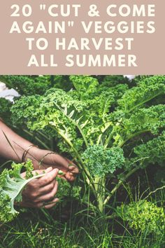 Succession Planting, Companion Planting, Growing Vegetables At Home, Perennial Vegetables, Bountiful Harvest, Dandelion Flower, Mary Mary, Garden Yard Ideas, Organic Gardening Tips