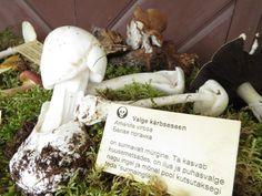 Seenetarkust Sagadi seenenäituselt