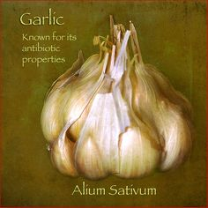 Garlic.  A HUGE article on the healing properties of garlic.  How to use it and for what.